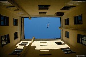 Окно в небо  (двор, окно, птица, чайка)