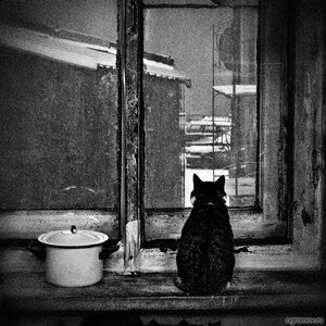 Кошка, которая ждет (кастрюля, коммуналка, кот, монохром, окно)