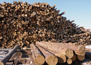 В Приморье выявлено 197 преступлений, связанных с незаконными вырубками леса