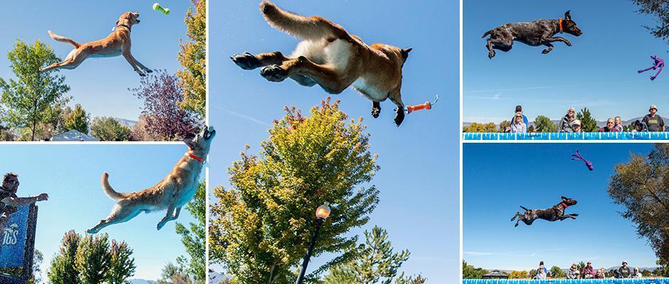 Соревнования по прыжкам в длину и высоту среди собак