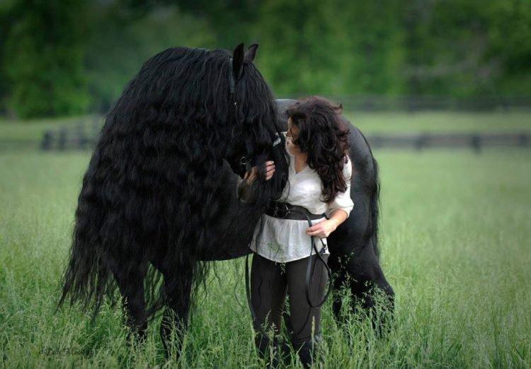 Фредерик Великий — обладатель неофициального титула «самая красивая лошадь в мире» (7 фото)