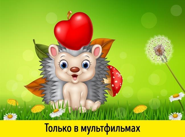 © depositphotos     Еж, несущий наспине яблоко,—  неболее чем миф  или