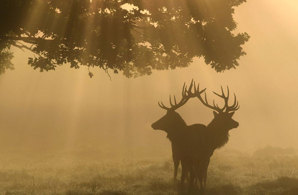 10. Осенние подсолнухи и фотограф, которого фотографирует другой фотограф. (Фото Charlie Riedel):