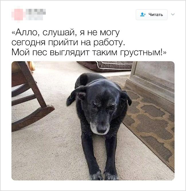 © ohpolly/twitter     Апробиваютли вас ваши домашние животные наубойные шуточки? Делит