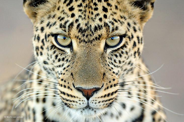 Конкурс дикой природы Wildlife Photographer of the Year (24 фото)