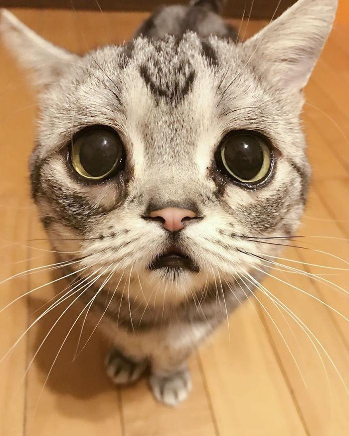 Луху: самая грустная кошка на свете, чьи фотографии разобьют ваше сердце