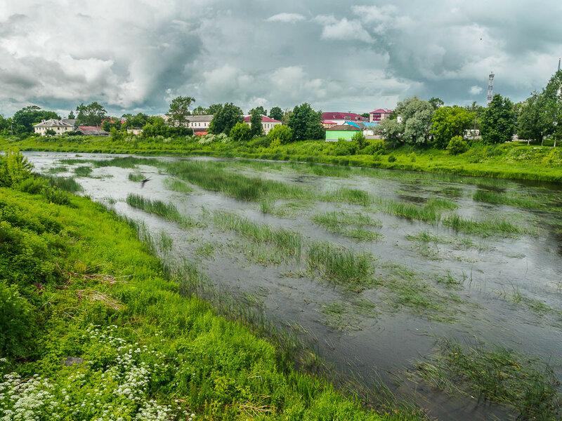 По заросшей реке Великой бродят цапли.