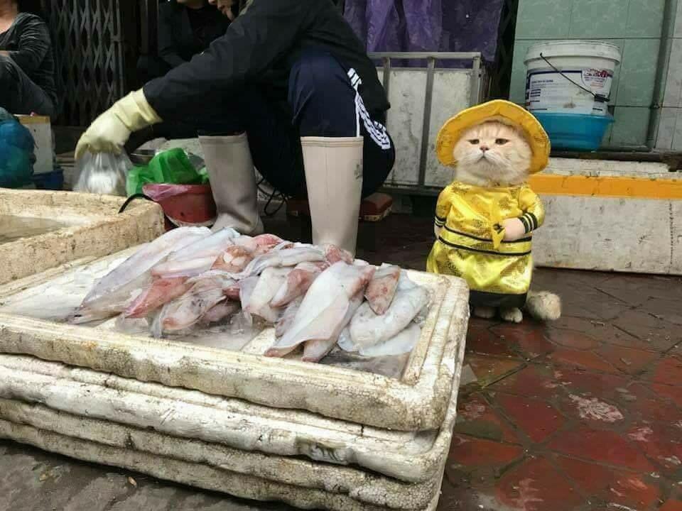 Cимпатичный продавец рыбы