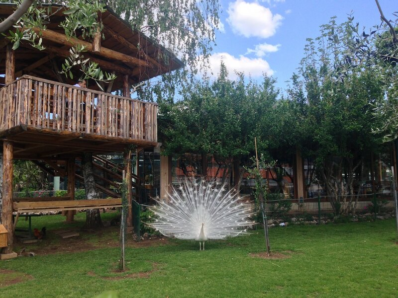 Май в Черногории