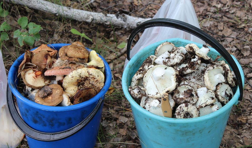 Полные ведра грибов!
