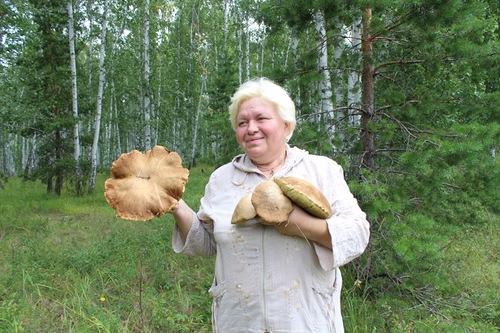 Огромные белые грибы