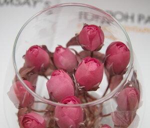 Роза - царица цветов 3 0_170827_81d3a293_M