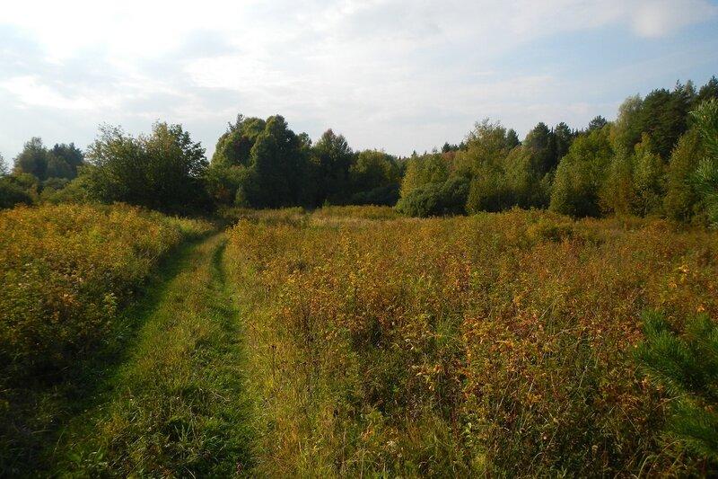 полевая дорога между пожелтевшими кустами шиповника