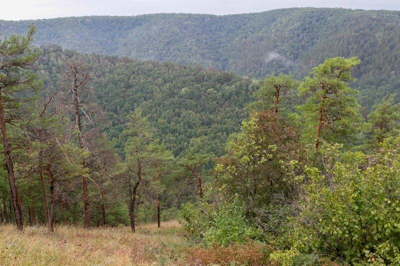 Растительность Жигулевских гор, Жигулевский заповедник