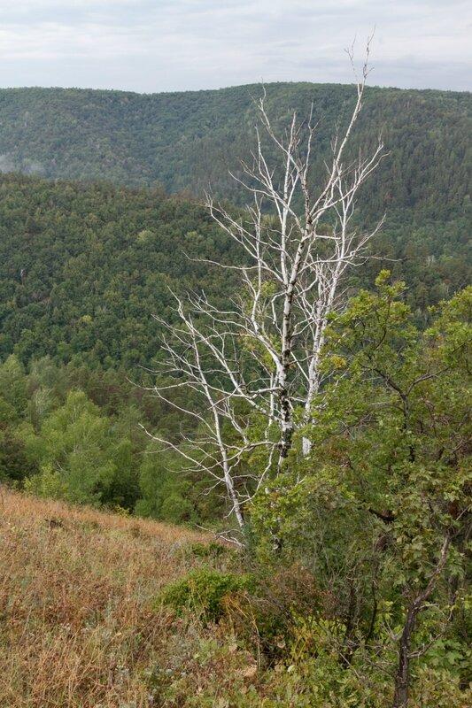 Сухая береза, Жигулевские горы