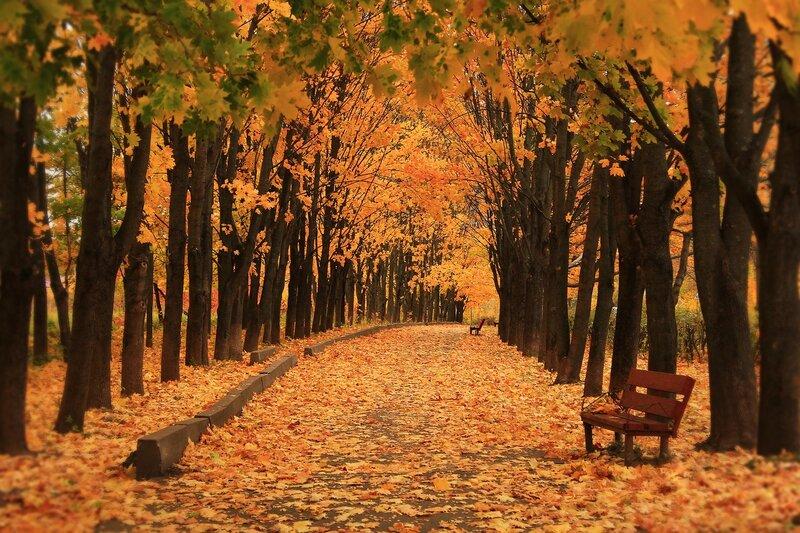 Осенним днем..