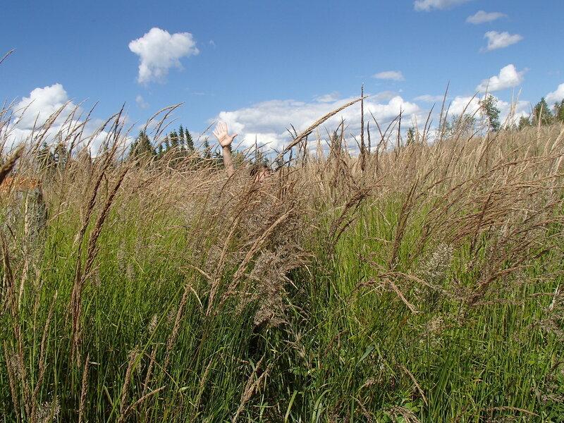 трава на вырубке на тропе E10