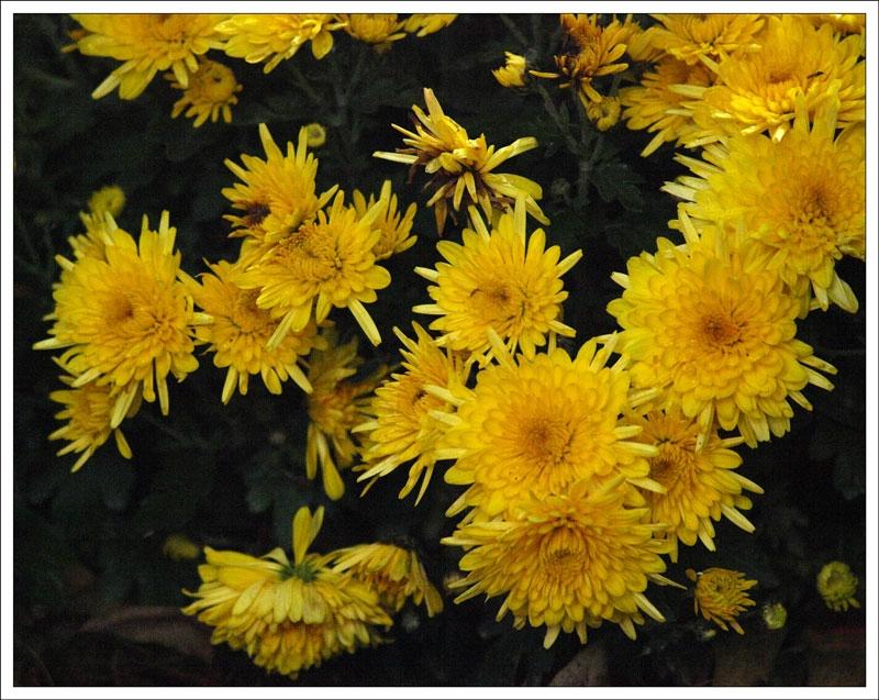 133_Flowers.jpg