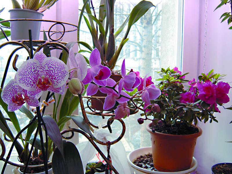 Цветник с орхидеями