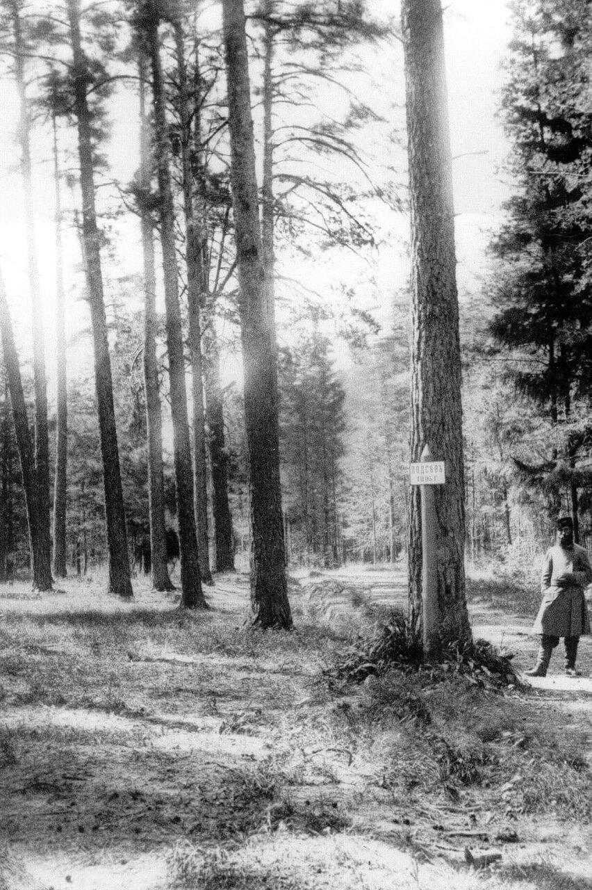 12. Обсеменительная лесосека в лесной даче графа П.П.Шувалова