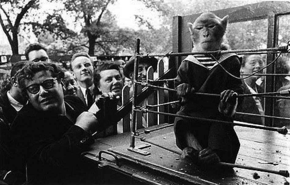 1954. Среди приматов