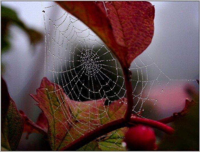Осень... Утренних слёз паутина...