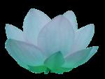 line_lotus_element55.png