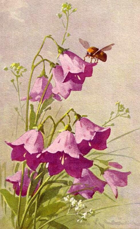 Колокольчики цветы открытки 20