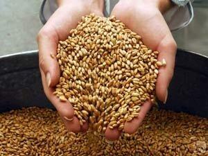 Фермеры Дальнего Востока получат субсидии от государства