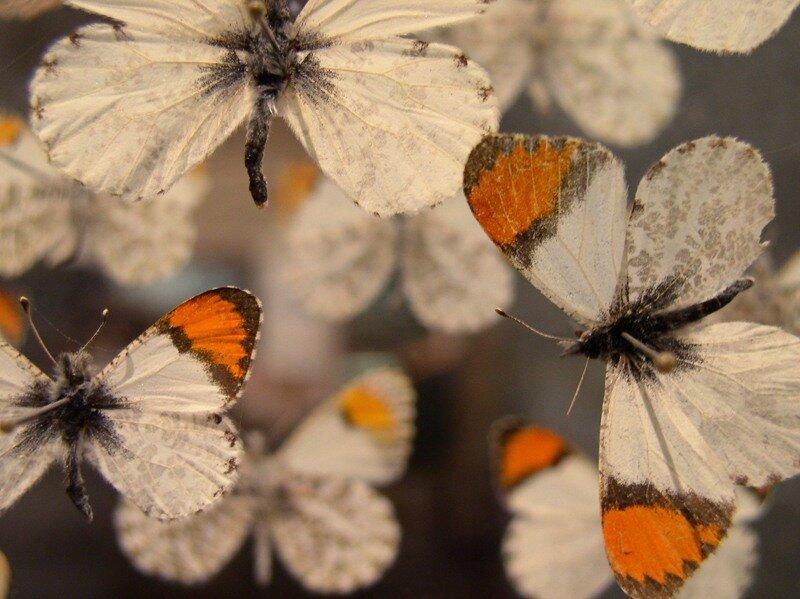 Butterflies in CasePhoto © Joanna Ebenstein