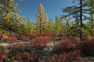 Сказки осеннего леса