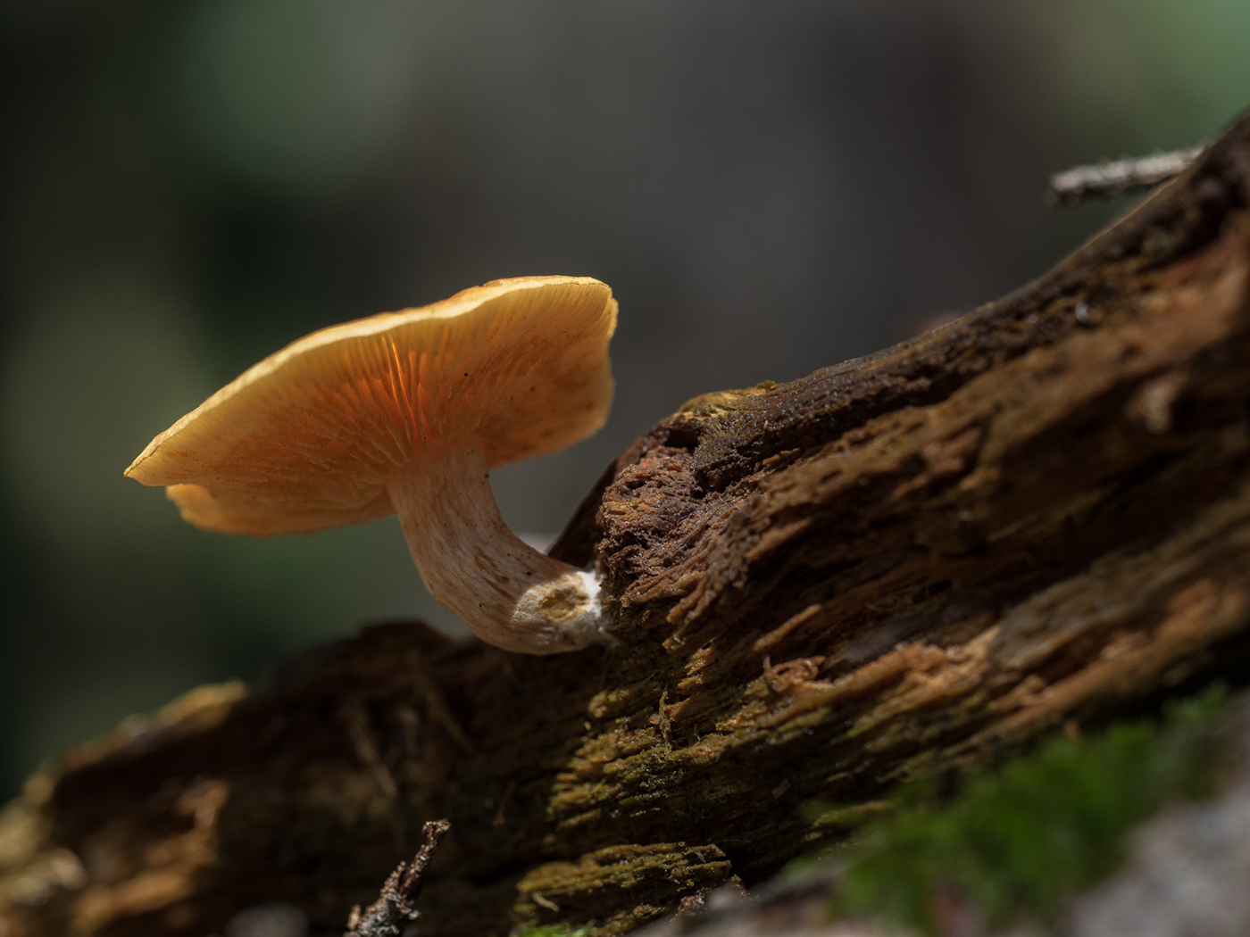 Лесные грибы / фотограф Lothar Malm