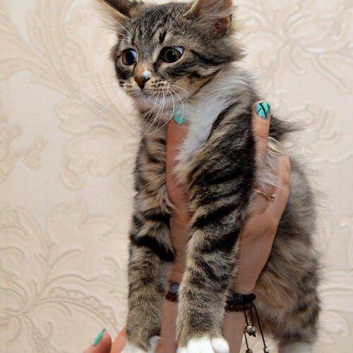Томас кот из приюта догпорт фото