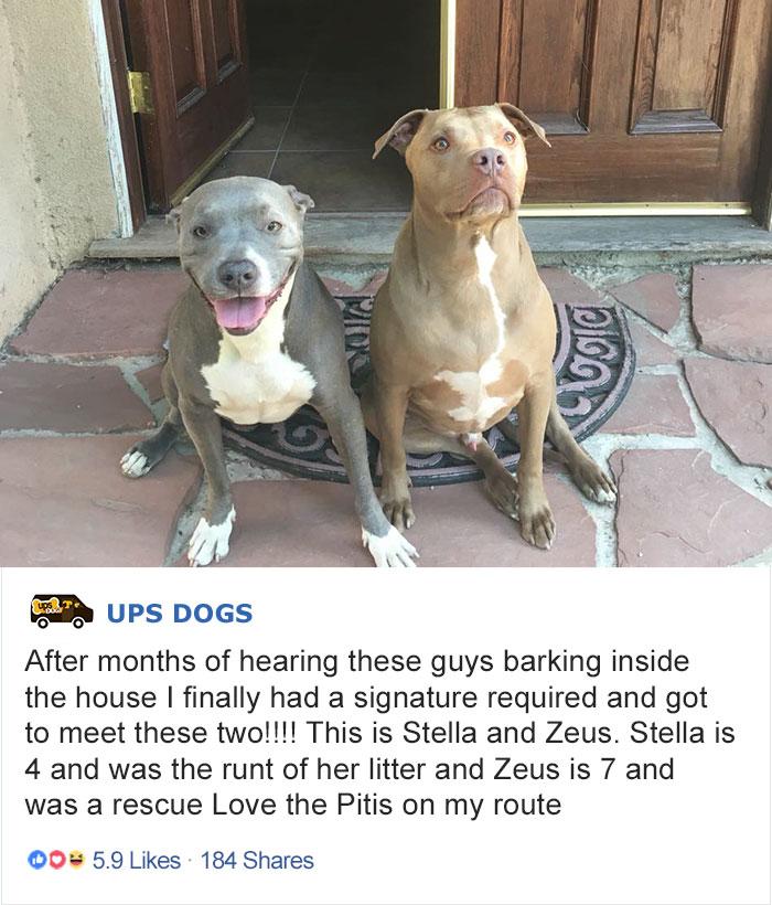 «Пару месяцев, доставляя к дому почту, слышал, как лают внутри две собаки. Сегодня я наконец с ними