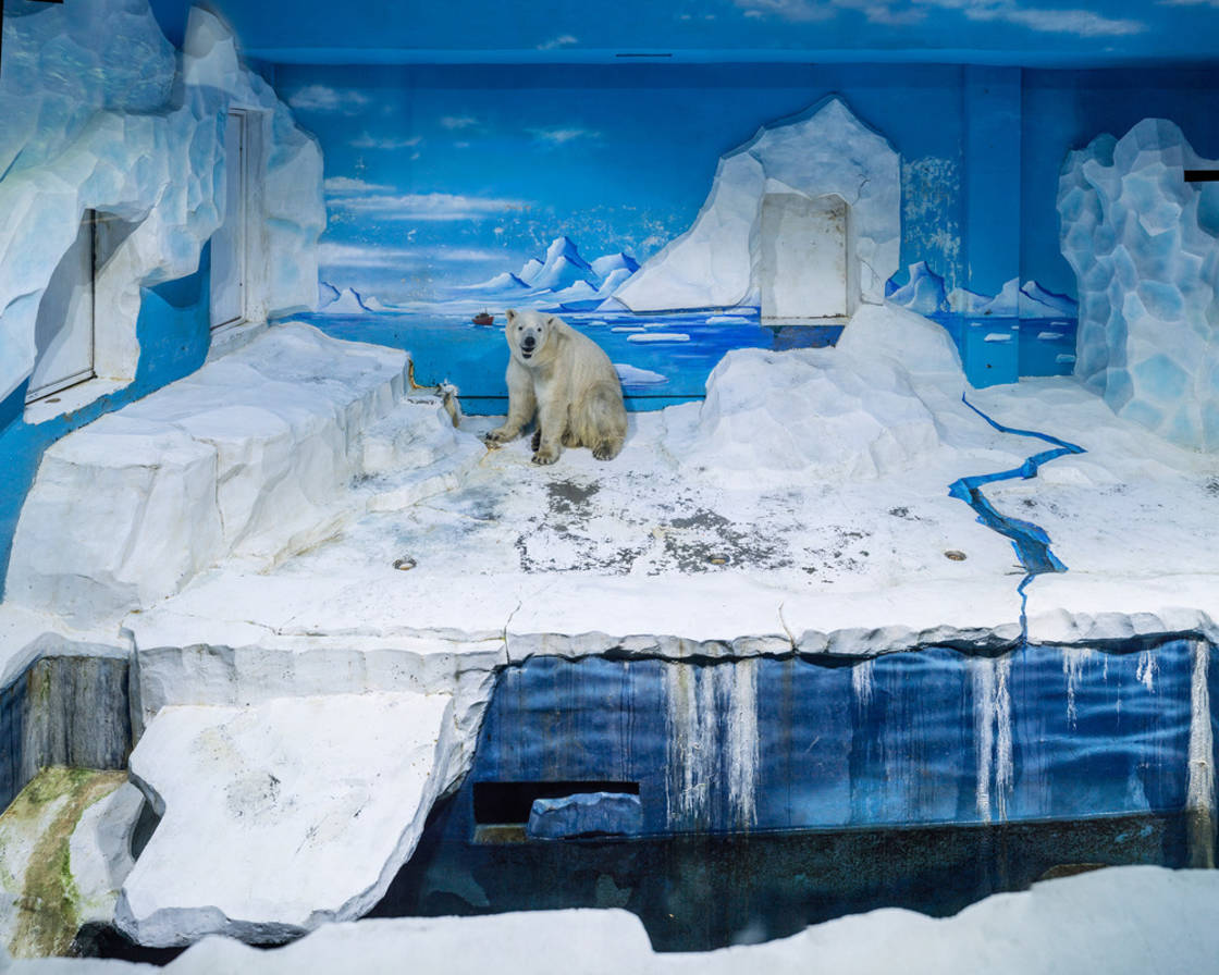 White Bear - Documenting the sad life of polar bears in captivity