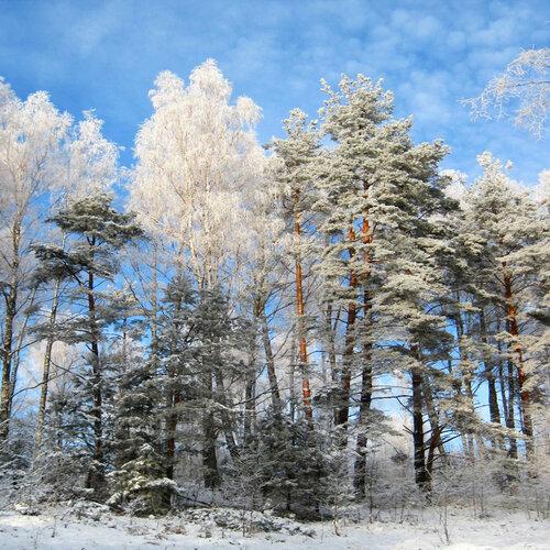 Под белоснежною пушистою фатою деревья все и все кусты...7