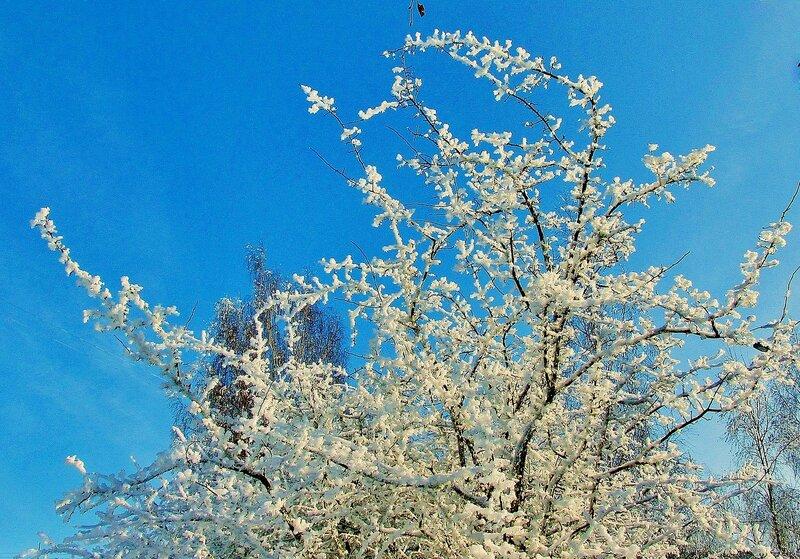 Словно сакура цветёт