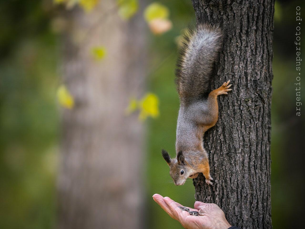 материал содержит белки на деревьях фото общем
