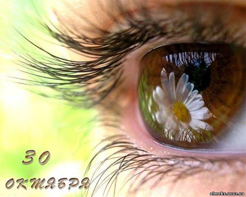 30 октября День карих глаз. Отражение Ромашки в глазах