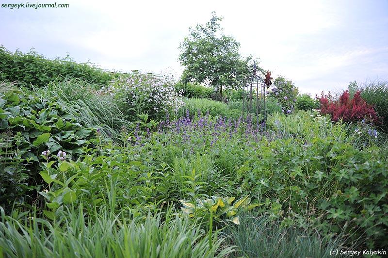 Salvia verticillata Purple Rain (5).JPG