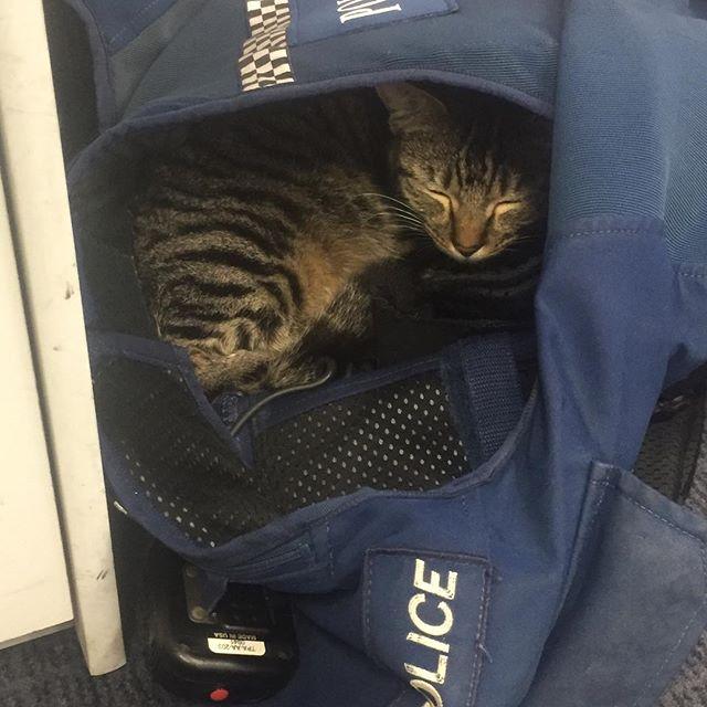 Кот полицейский из новой зеландии фото