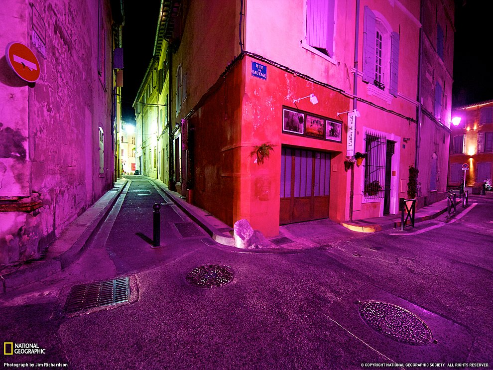 Фиолетовые крокусы (Фото Stacy Gold):