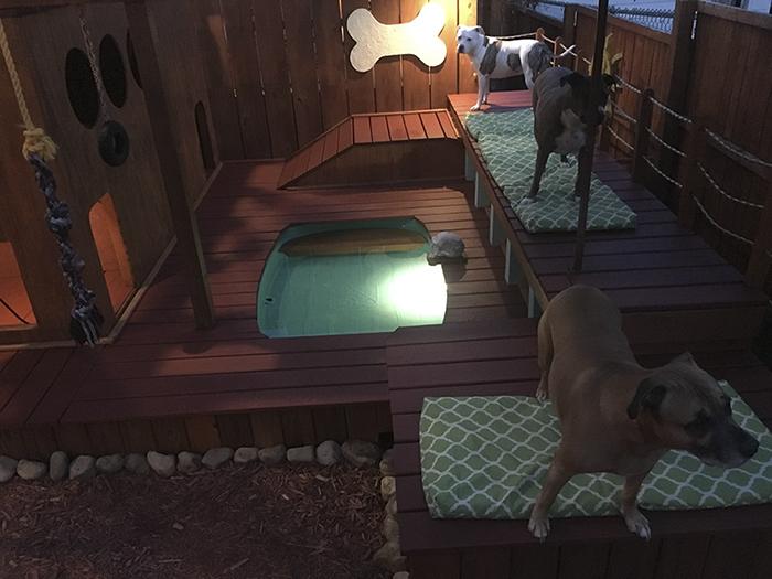 Для взрослых собак эта площадка стала местом отдыха, младшие здесь играют, прыгают и резвятся.