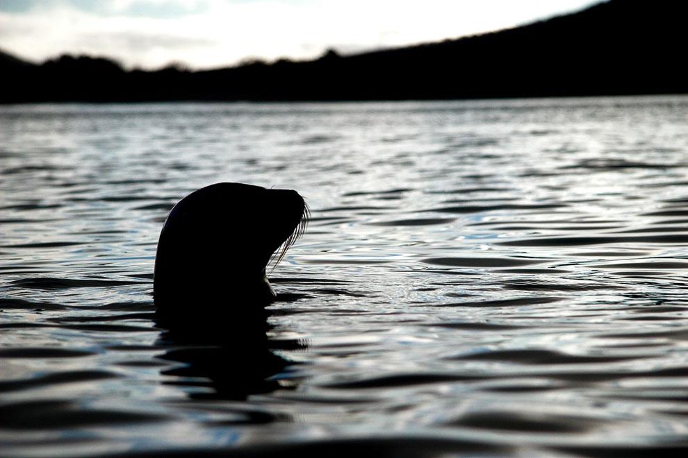 Морская игуана. На берегу ящерица греется на солнце, удерживаясь на камнях с помощью мощных когтей.