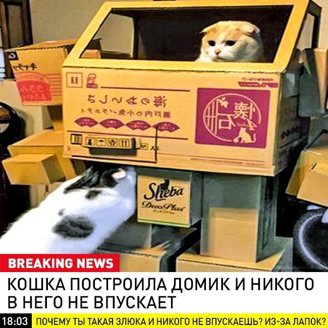 © breaking_animal / vk      Оситуации надорогах