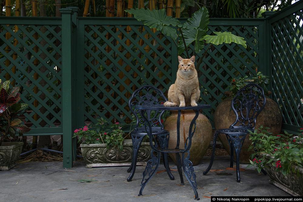 Ки-Уэст. Молчание котов.