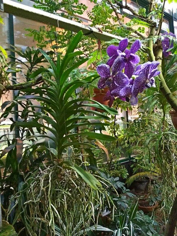 Тропическая оранжерея с орхидеями в Аптекарском огороде