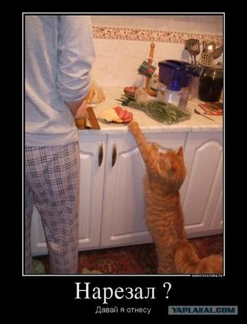 cating-1.jpg