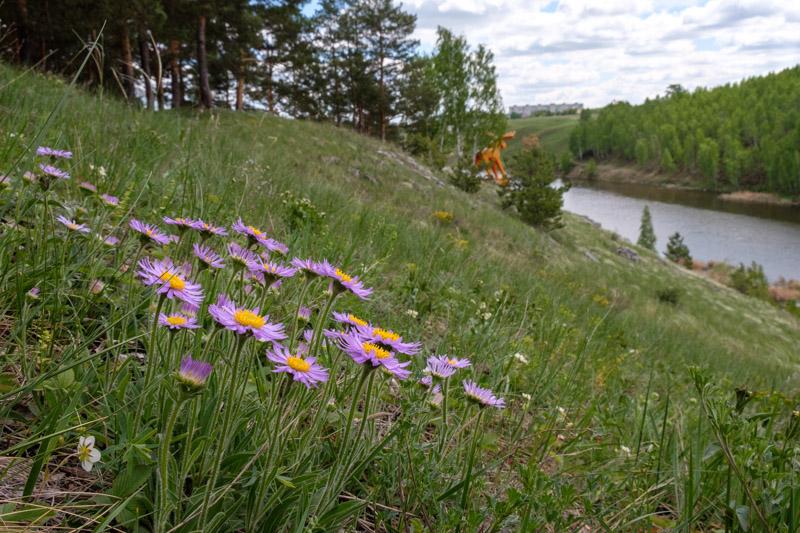 сиреневые цветы и оранжевый лось в разгуляевском парке, Каменск-Уральский