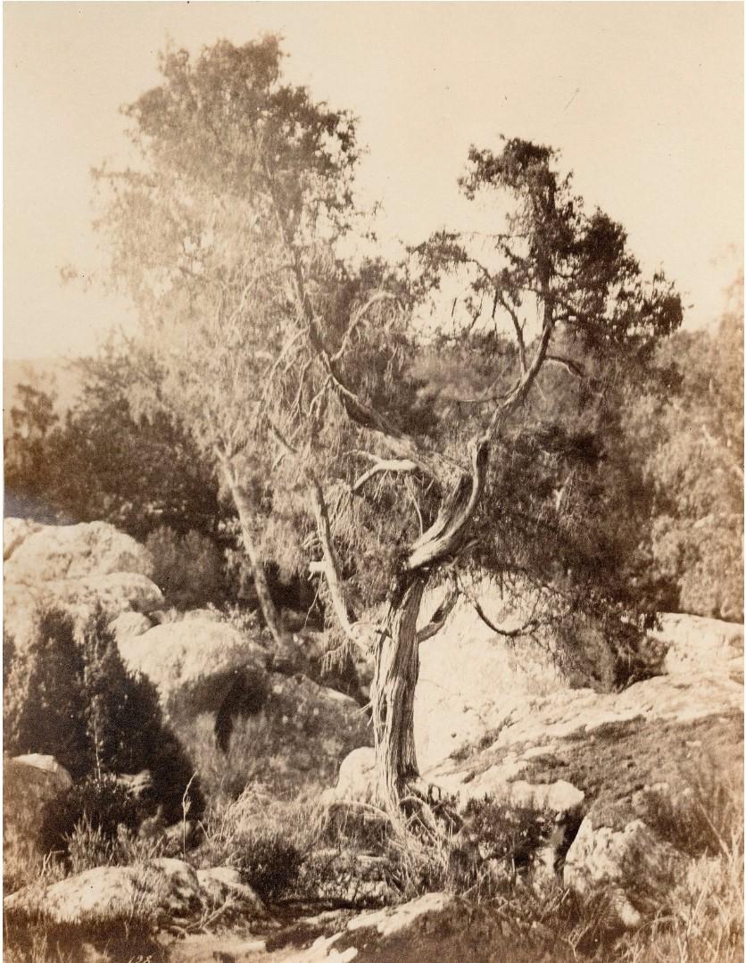 1860. Фонтенбло